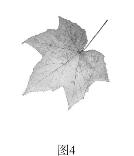 如图4,一片树叶正从树上缓慢飘落,请在图中画出此时该
